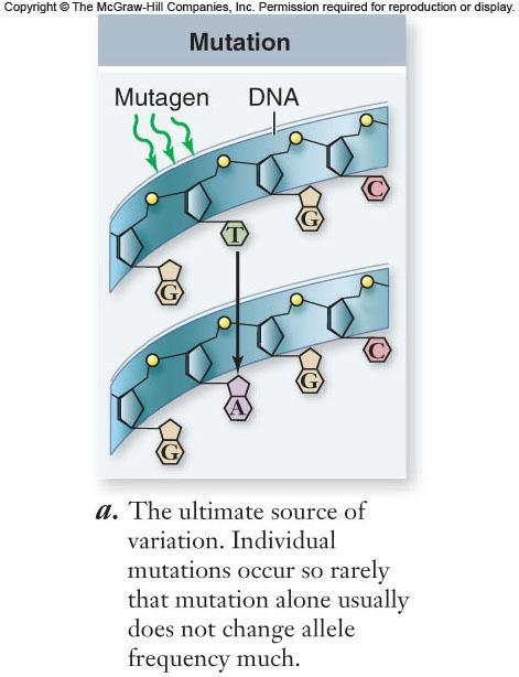 5 agents of evolutionary change Mutation Rates generally low Other evolutionary processes usually more