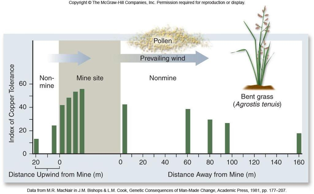 Slender bent grass at copper mines Resistance allele occurs at intermediate levels in many areas Individuals with