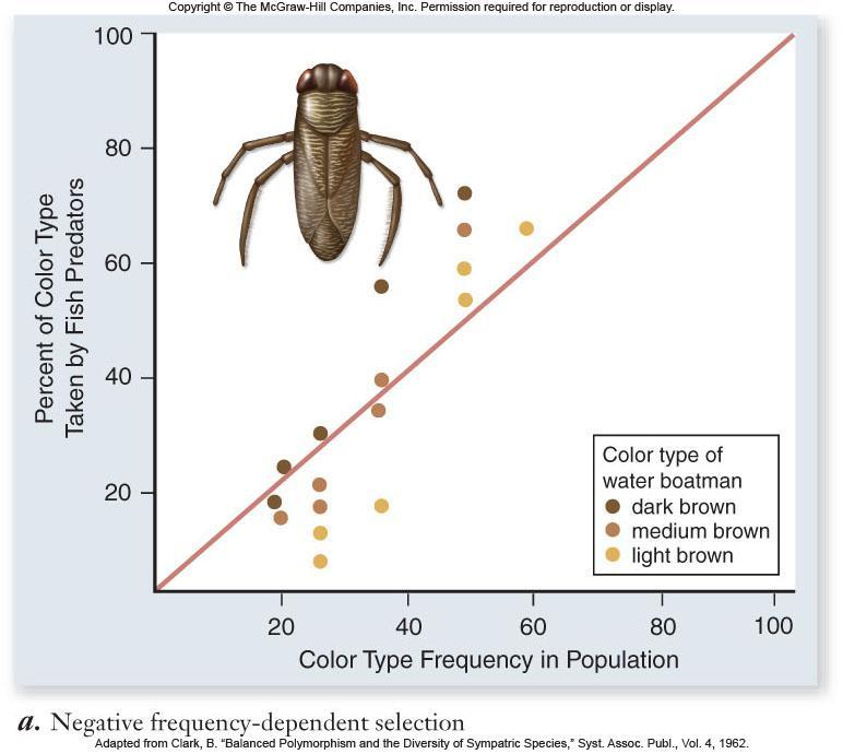 Negative frequencydependent selection In water boatman, fish eat