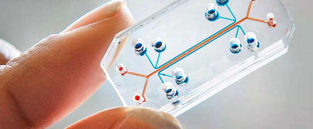 DR. HUH S innovative tissue-on-a-chip has the potential to transform immunotherapy research CANCER RESEARCH