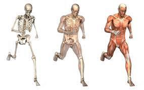 Body composition: your body consists of many different types of tissue, such as