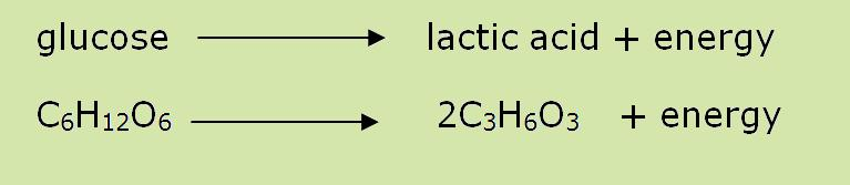 Lactic Acid system: no oxygen goes for 10-60 seconds slightly longer