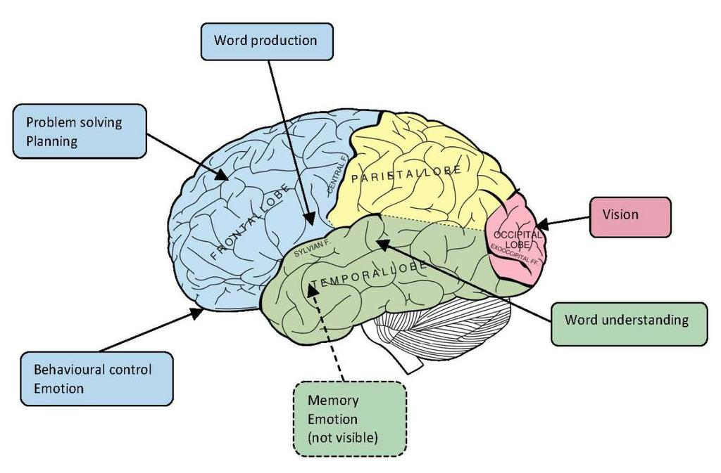 COGNITIVE DOMAINS OF THE BRAIN: BASIC OVERVIEW