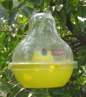 McPhail (McP) Trap type General description The conventional McPhail (McP) trap is a transparent glass or plastic, pear-shaped invaginated container. The trap is 17.2 cm high and 16.
