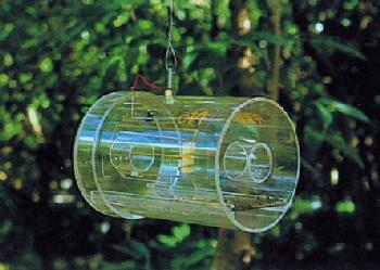 It has a transparent body and a blue overhanging lid which has a hole just underneath it. A wire hanger placed on top of the trap body is used to hang the trap from tree branches.