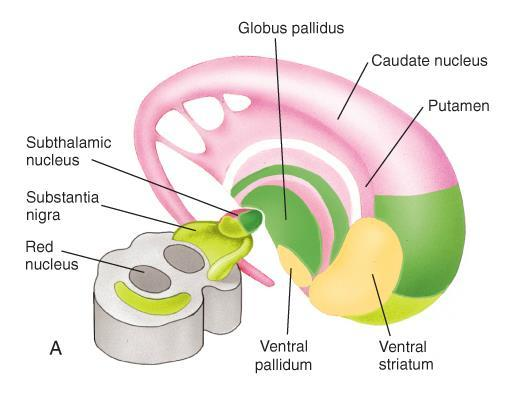 Subthalamic nucleus: located within the diencephalon Substantia nigra: located within the midbrain Based on anatomic proximity, the cerebral