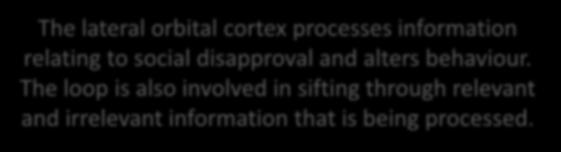 Behavioural flexibility and control loop The lateral orbital cortex processes information relating to social disapproval