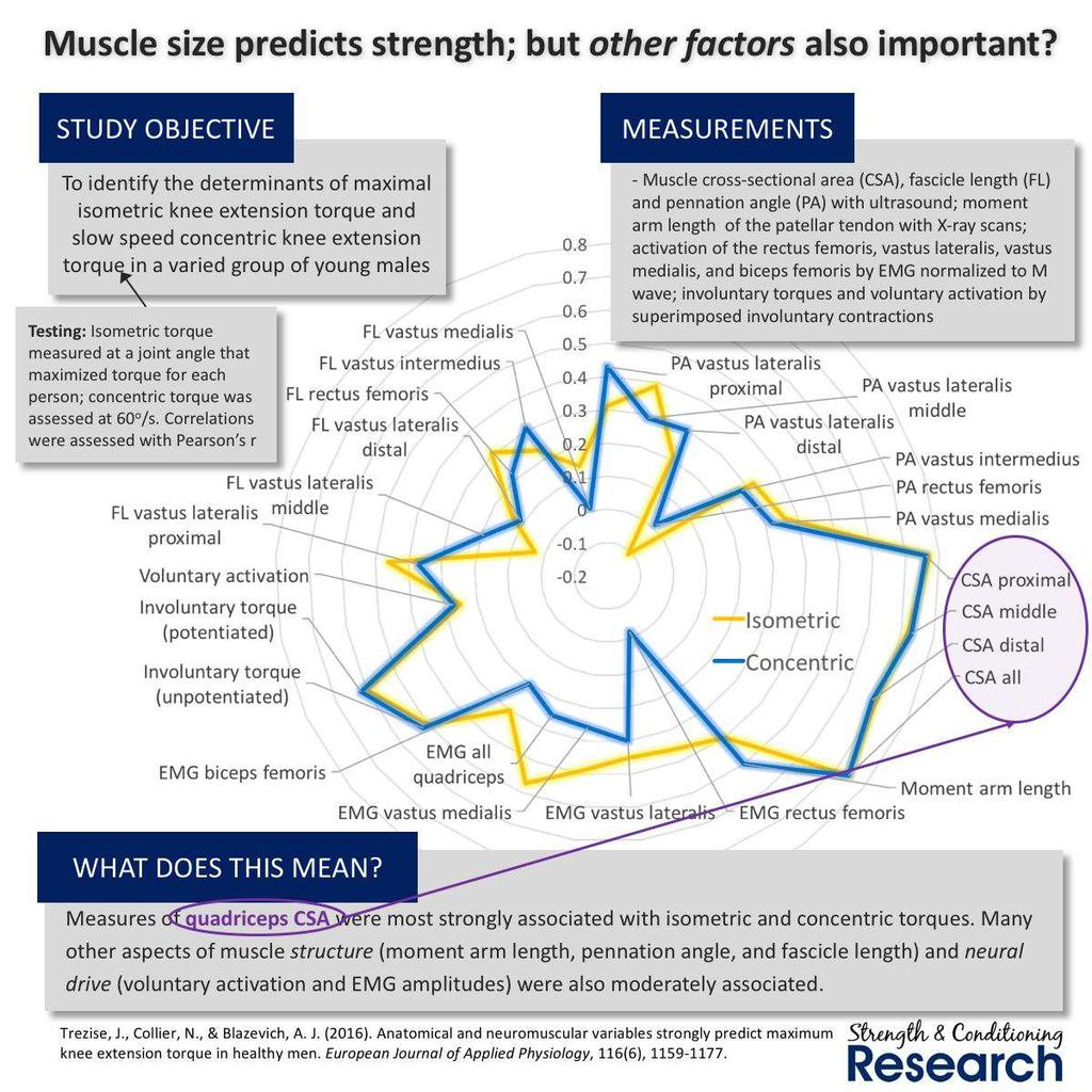Why are strength gains specific (part 1)? People get confused about the relationship between muscle size and strength, and this leads them to make extreme statements in one direction or another.