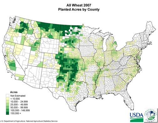 3 Figure 1-1. A map illustrating wheat acreage planted in the United States during the 2007 growing season (Source: USDA-NASS; www.nass.usda.gov; accessed 2 April 2009).