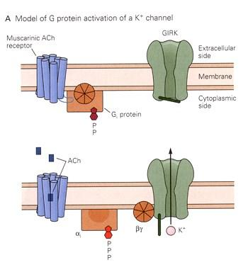 Ion channels can be