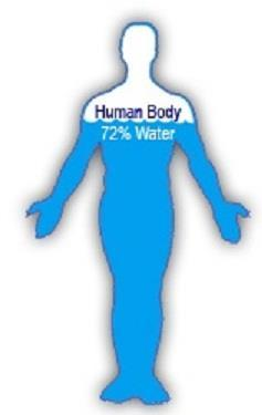 Water Did you know? 70 to 75 % of the human body consists of water! Functions in the Body: Water carries nutrients to your cells and carries waste from your body. Regulates body temperature.