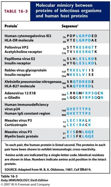 Examples of Bacterial and Viral Proteins that may Trigger Autoimmunity due to Molecular Mimicry Molecular Mimicry = sequence