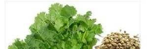 Order :apiales Family :apiaceae Genus :Coriandrum Species :sativum Figure1: Coriander (fruit, powder leaves) stigmastadienol and camposterol. Total ST estimated to be in the range of 36.93-51.86 mg/g.