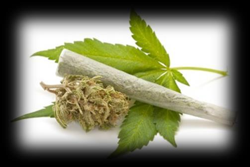 Safety and Side Effects Preferable safety profile Cannabis receptors are not
