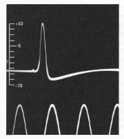 We must have some way of saving the voltage signal so that we can find the spikes (action potentials) later A single action potential Digital Analog 1 ms (1/1000 sec) Reprinted by permission from