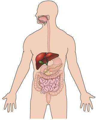 Bilirubin is usually cleaned out from our body through the liver. The liver creates bile that has the bilirubin in it. The bile goes through the lower digestive tract.