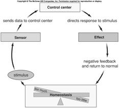 4.9 Homeostasis Negative feedback The primary mechanism for maintaining homeostasis Has two components: sensor control center The