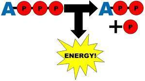 2. Two molecules of ATP are consumed at the