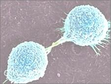 INTRODUCTION Tumor: cells that continue to replicate, fail to differentiate into specialized cells, and become