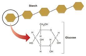 Carbohydrates Elements Carbon, Hydrogen, and Oxygen Primary Energy source for cell (fuel for life) Monomer