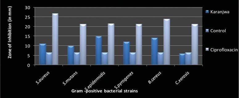 107 Figure 2: Antibacterial activity of Karanjwa extracts against Gram positive strains Figure 3: Antibacterial activity of Karanjwa extracts against Gram negative strains fulfill this promise to a