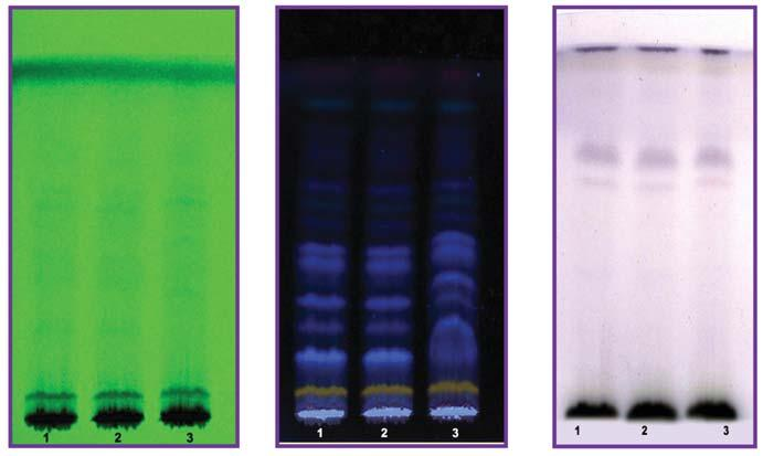 118 Thin Layer Chromatography (Alcohol Extract) Fig.VI Fig.VII Fig.