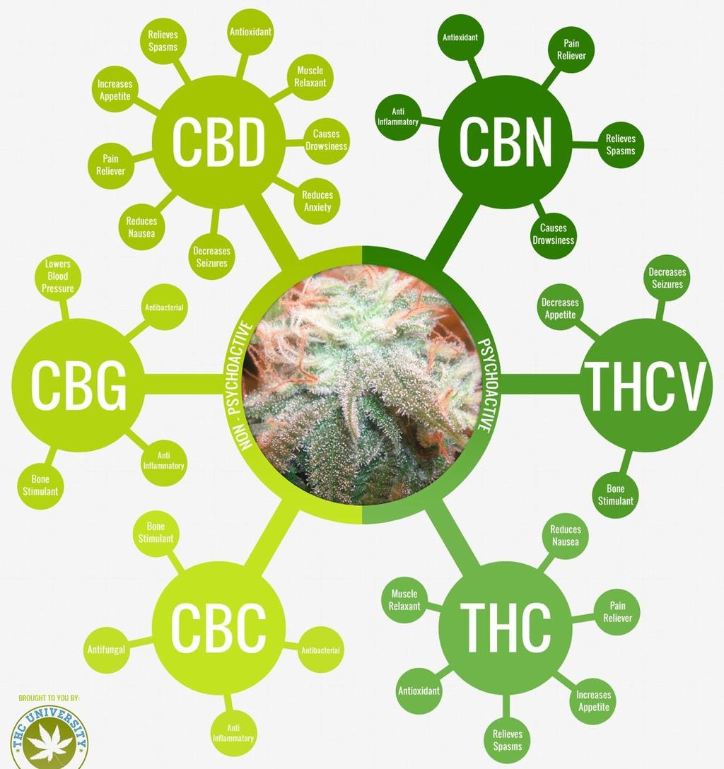 Cannabidiol Plant-derived Cannabinoids ~ 100 different types in Cannabis Cannabinol