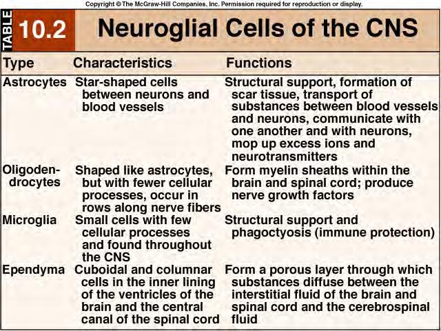 CELLS of the