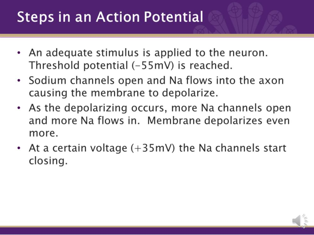 Now that we are familiar with some of the terms, lets start to walk through the steps of an action potential. 1. An adequate stimulus is applied to the neuron. Causing Na to leak into the cell.
