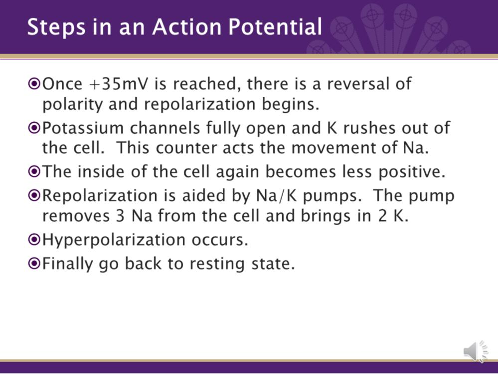 5. Once +35mV is reached, there is a reversal of polarity and repolarization begins. 6. Potassium channels fully open and K+ rushes out of the cell. This counter acts the movement of Na. 7.