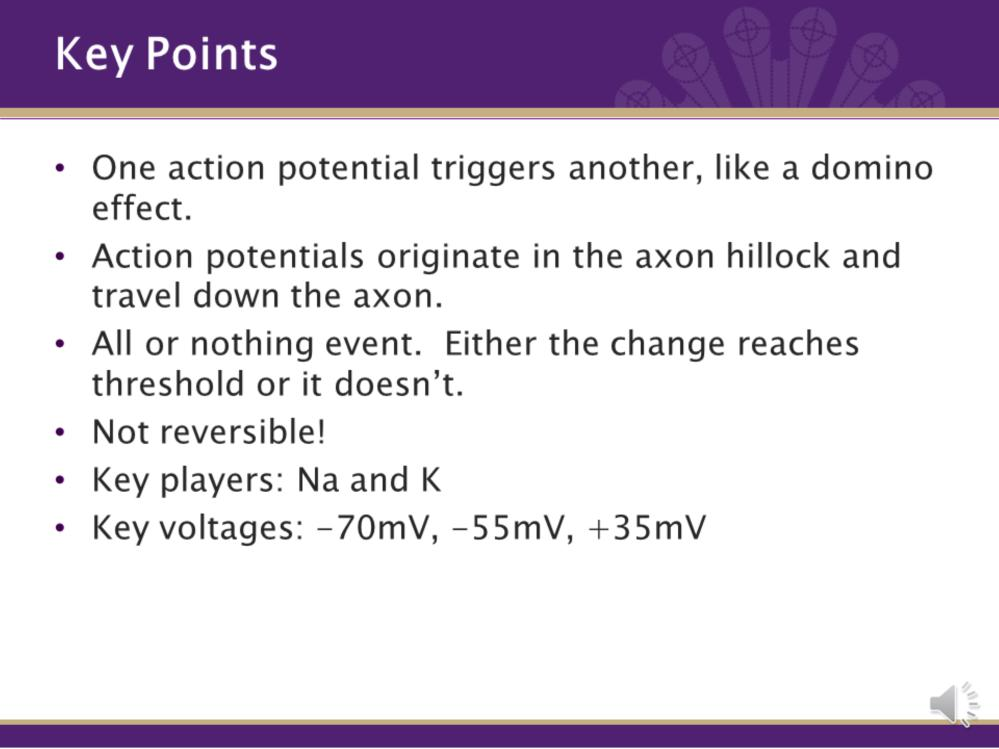 There are a few key points about action potentials that need to be mentioned and recalled. First, action potentials do not happen all at once along the entire axon.