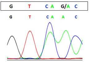 Genomic DNA analysis