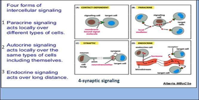.. Those are 4 forms of intracellular signaling: Important to mention that cell signaling requires complementary set of of receptor proteins in each cell that bind and respond to those molecules in