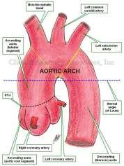reported prevalence of approximately 4 per 10,000 live births Coarctation of the aorta is the sixth most common