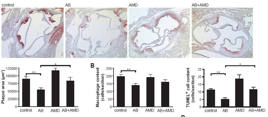 Transfer of mir-126 by endothelial AB induces CXCL12 expression and