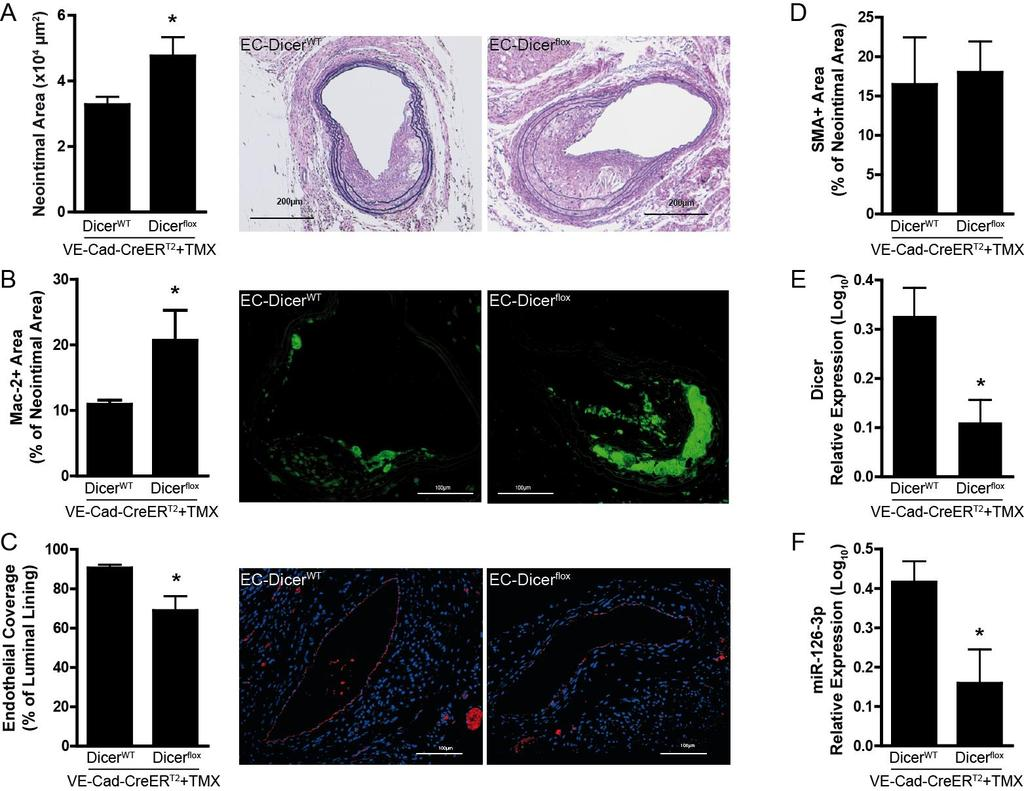 Impaired Dicer expression in endothelial cells exacerbates