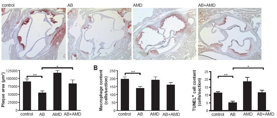 Transfer of human/plaque endothelial AB CXCR4-dependently reduces
