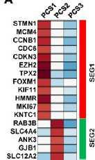 S You et al. Cancer Res 76, 4948-4958 (2016) Expression Arrays Investigate Gene Sets Curated Gene Sets Genes down-regulated upon IL6 deprivation.
