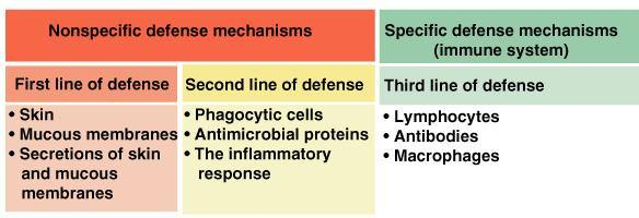Types of Immunity Innate (non-specific) immunity Adaptive (specific) immunity The human body has several different ways that it defends itself against infection by pathogens.