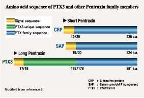 Pentraxins pentameric plasma proteins belong to the