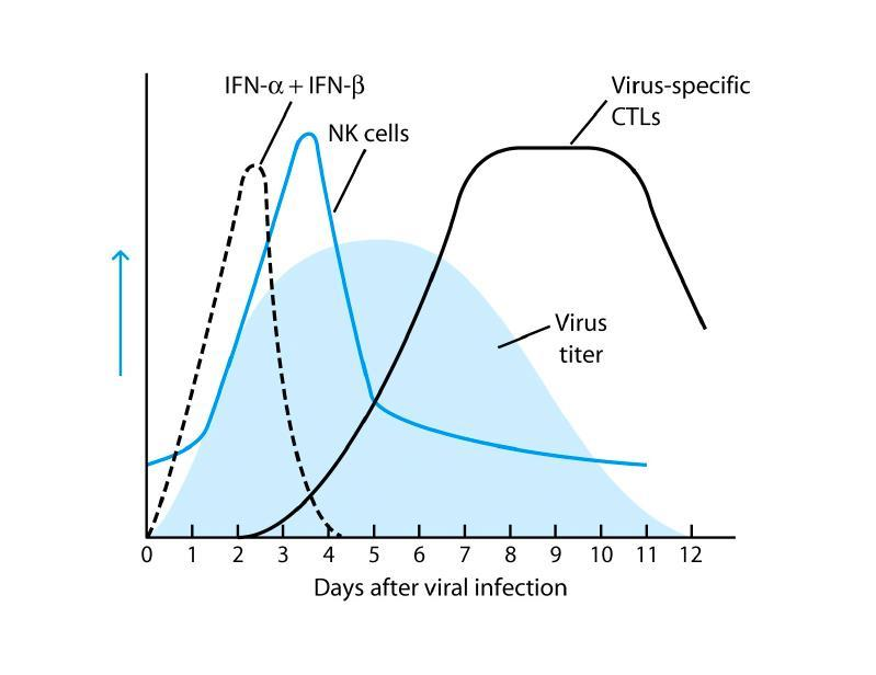 Innate and adaptive immune responses in viral