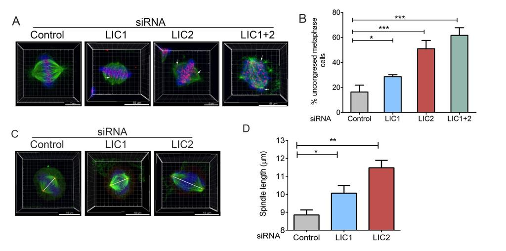 Supplementary figure S9 Supplementary figure S9: LIC2 is required for chromosome congression and for regulating mitotic spindle length A) Mitotically arrested HeLa cells stained for microtubules