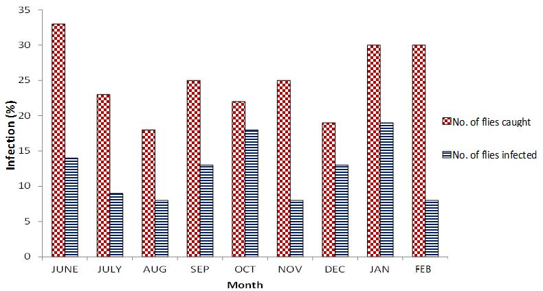 Maikaje et al. 3 Figure 2. Monthly distribution of O. volvulus infected S. damnosum in the bank of River Kaduna within Kaduna Public Park. June 2008 and February 2009.