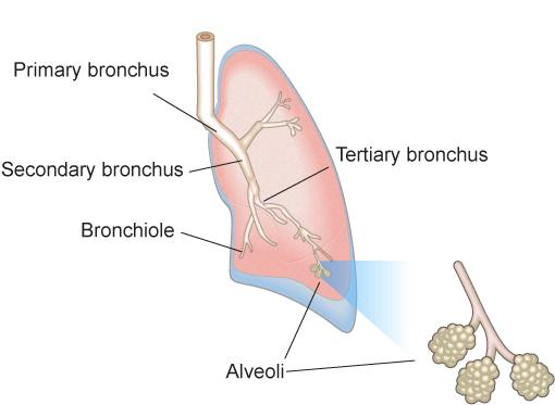 PULMONARY FUNCTION TEST The efficiency of gas exchange between air and blood, which occurs