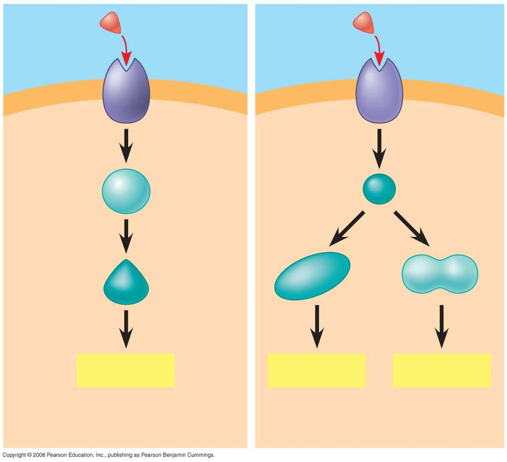 Fig. 11-17a Signaling molecule Receptor Relay molecules Response 1 Cell A.