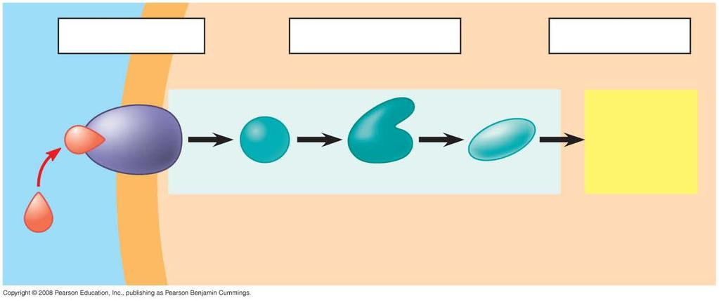 Fig. 11-UN1 Reception Transduction Response 1 2 3 Receptor