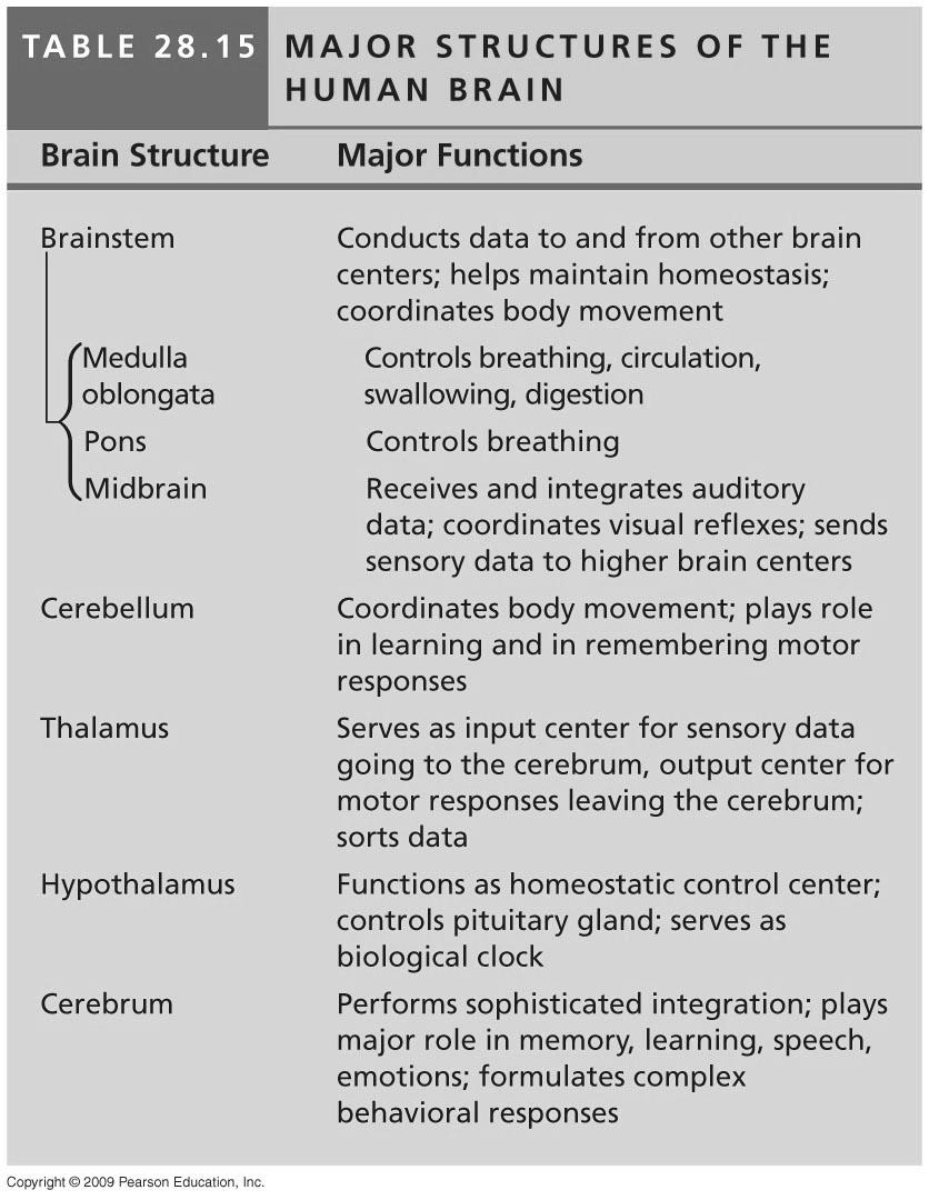 28.16 The cerebral cortex is a mosaic of specialized, interactive regions!