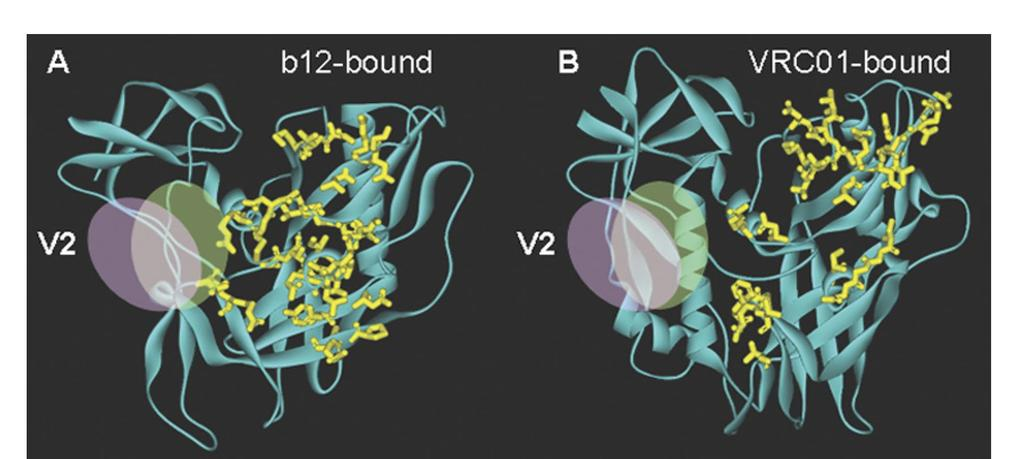 Flipping the V2 Position: Loss of Access to the CD4 Binding Site Mauve