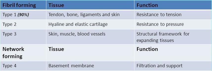 Types of collagen About 28 types of collagen known The difference is in