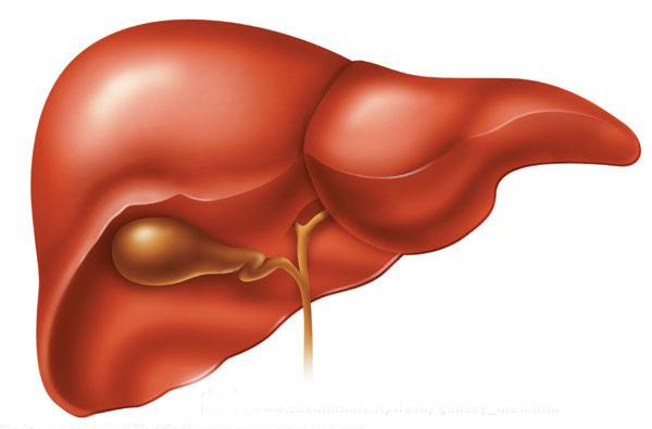Liver More than 9% of obese people with Type 2 diabetes have fatty liver Reversal of